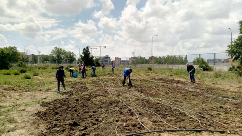 """(I) """"Campo dei Miracoli"""". La horticultura como medio y como fin. Visita a la huerta del campus de Móstoles de la URJC para la inclusión social"""